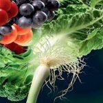 تقوية بصيلات الشعر عبر الغذاء والاسلوب الصحي