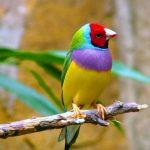 معلومات عن طيور الشرشوريات