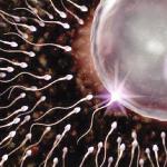 ما هو عدد الحيوانات المنوية اللازمة لحدوث حمل ؟