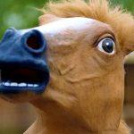 ماذا يطلق على صوت الحصان