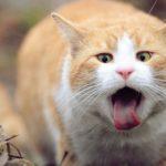 فيديو قطط مضحكة