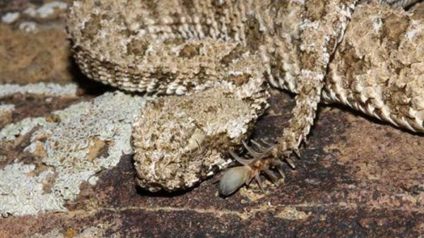 اغرب انواع الثعابين العالم