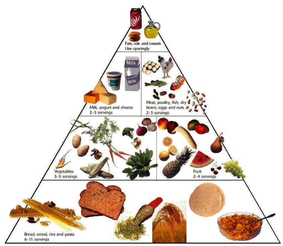 أنواع الأغذية