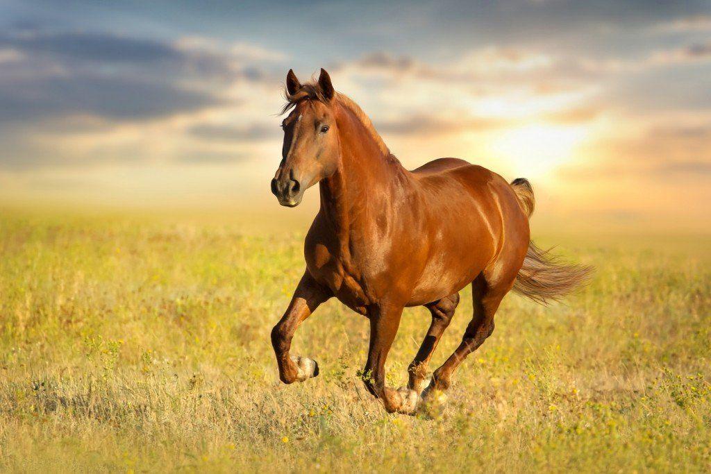 سرعة الحصان