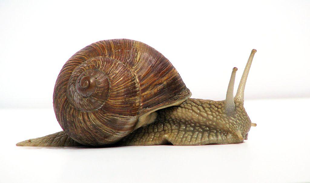 الحلزون Snails-can-survive-f