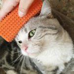 اسباب تساقط شعر القطط