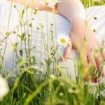 اضرار وفوائد البابونج للحامل