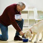 ما هو حكم تربية الكلاب في المنزل ؟