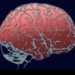 طرق فعالة في تقوية الذاكرة