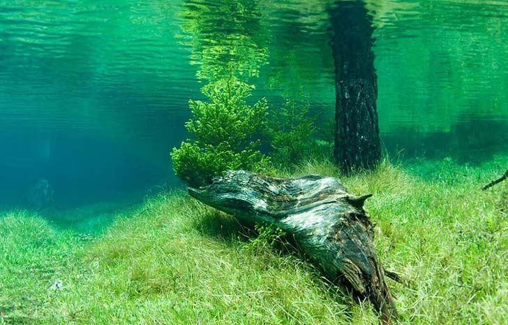 طبيعة البحيرة الخضراء