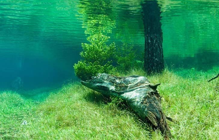 "Image result for ""البحيرة الخضراء"""