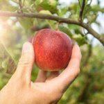 أفضل الأطعمة التي تقوم على تنظيف الكبد من السموم