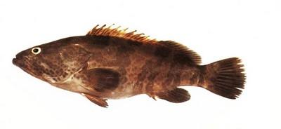 أفضل أسماك البحر الأبيض المتوسط