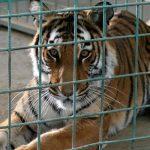 منتزة و حديقة حيوانات الخرج في الرياض