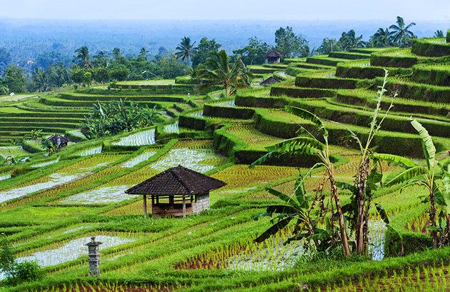 حقول الأرز Jatiluwih Rice Fields, Bali