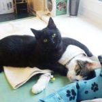 راديمينس القط الممرض