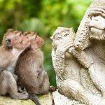 غابة القرود المقدسة - 436057