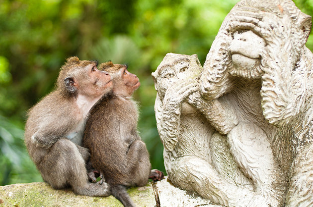 غابة القرود المقدسة