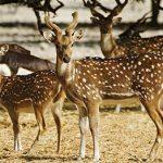 منتزه الحياة البرية العربية في أبوظبي