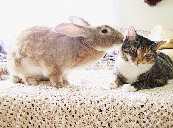 الصداقة مابين القط والأرنب