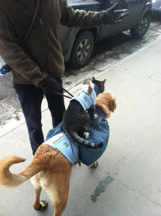 صداقات الحيوانات الغريبة
