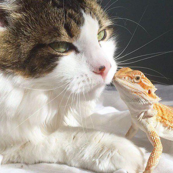صور الصداقة الغريبة مابين الحيوانات