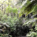 8-waipoua-forest-new-zealand - 433512