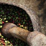 أفضل 10 مطاعم تقدم الوجبات التراثية الاندونيسية في جزيرة بالي