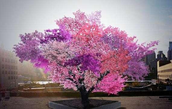 هل سمعت عن شجرة تثمر أربعين نوع من الفاكهة؟ %D8%A3%D9%84%D9%88%D8%A7%D9%86-%D8%A7%D9%84%D8%B4%D8%AC%D8%B1%D8%A9
