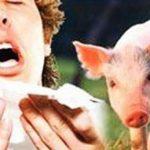 الأعراض الخاصة بمرض إنفلونزا الخنازير