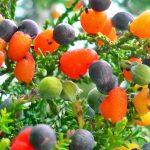 شجرة تثمر أربعين نوع من الفاكهة
