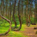 غابة هويا باكيو … اكثر الاماكن رعبا فى العالم
