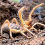 معلومات عن العنكبوت الجملي