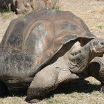 اكثر 10 حيوانات معمرة في العالم