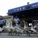 غرائب وطرائف لن تراها إلا في الصين