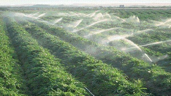 اهم العوائق الزراعية في السعودية المرسال