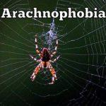 علاج جديد لمن يخافون من العناكب