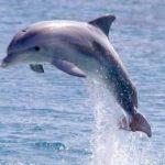 كيف ينام الدولفين في الماء
