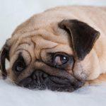 هل تعلم أن الكلاب يصيبها مرض الاكتئاب