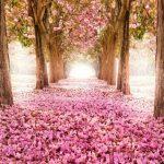 مسارات المشي الاكثر جمالا