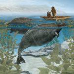 معلومات عن بقرة البحر