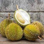 دور فاكهة الدوريان على الحمل و علاج العقم