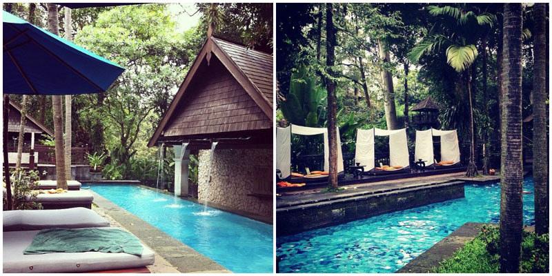 فنادق وسط الغابات المطيرة في بوجور المرسال
