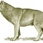 حيوان الذئب الرهيب المنقرض