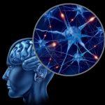 ما هي أنواع الذاكرة ؟