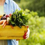 أفضل المنافع الصحية للأطعمة العضوية