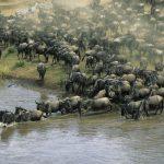 حيوانات تعيش في أفريقيا