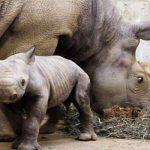 ماهي وسائل حماية الحيوانات من الانقراض ؟