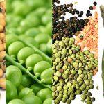 فوائد البروتين النباتي للحماية من خطر السكري