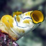 معلومات عن نافورات البحر